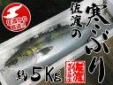 【佐渡】佐渡の寒ぶり【約5Kg】