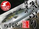 【佐渡】佐渡の寒ぶり【約10Kg】