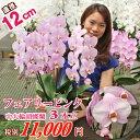 中輪胡蝶蘭フェアリーピンク3本立ち ラッピング・立札・カード無料 お誕生日 結婚祝い 各種ギフト・プレゼントに
