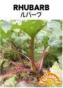 【藤田種子】ルバーブ野菜のタネ
