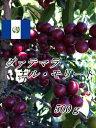 グァテマラ エル・モリート【COE上位入賞の大規模農園】◆500g◆深煎り