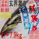 天然 ぶり 寒ブリ 嫁ブリ 長崎県壱岐産 7kg〜7.9kg...
