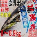 天然 ぶり 寒ブリ 嫁ブリ 長崎県壱岐産 8kg〜8.9kg...