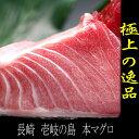 【送料無料】長崎県・玄界灘 壱岐の本マグロ 大トロのブロック150g以上・2〜3人前