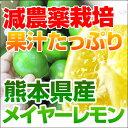熊本県三角産中山さんのレモン1箱5kg入9月下旬頃から収穫予定ノーワックス