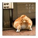 【4/21発売】必死すぎるネコ タオルハンカチ B