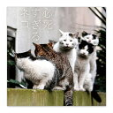 【4/21発売】必死すぎるネコ タオルハンカチ C