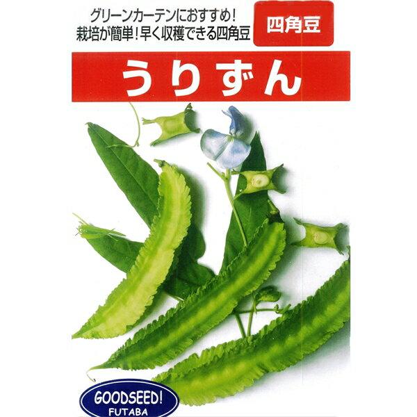 四角豆 種 【うりずん 小袋】の商品画像
