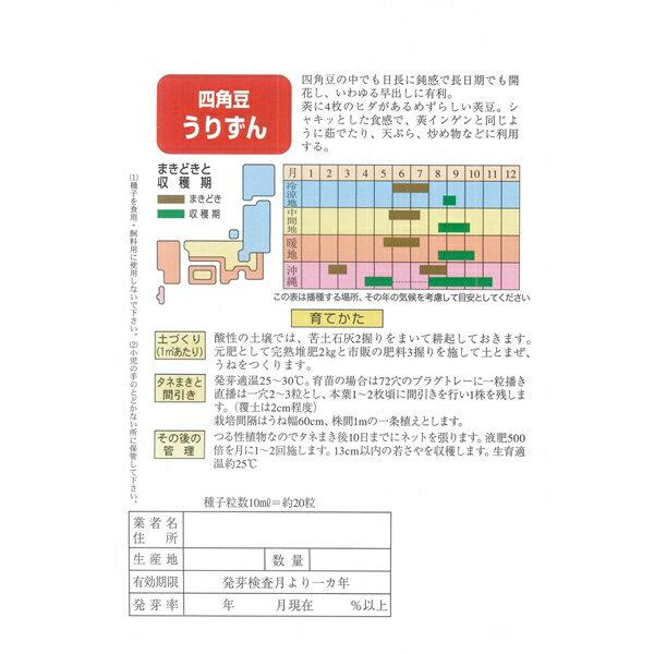 四角豆 種 【うりずん 小袋】の紹介画像2