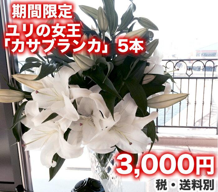 ゆり 『カサブランカ』5本 生花/切花/花束...:futabaen:10000837