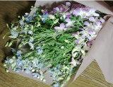 一个兰花花束Denfare Delfinum[蘭・デンファレ・デルフィニュームの花束【駅伝近畿】]