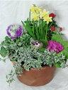 春の寄せ鉢 テラコッタ鉢
