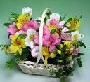【4月の誕生花 アルスロメリア】3色のバスケットアレンジメント