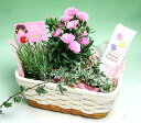 【母の日】 ミニカーネーションの寄せ植え+蘭エキスのハンドクリーム:【smtb-k】【kb】