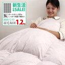 初めての羽毛布団にお勧め 羽毛布団 シングル 日本製 全国120店舗の寝具店がお届けする羽毛布団 増量  シングルロングサイズ WDD50%  240 1.2kg 新生活応援 メリー  ルミ