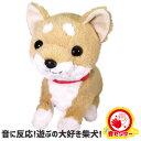 お得なクーポン配布中 あそぶの大好き 柴犬 まめ太 ぬいぐるみ 犬 おもちゃ タッチセンサー かわいい おすすめ