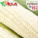 【出荷中】北海道 とうもろこし ピュアホワイト(白色) 6本...
