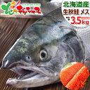 【出荷間近】北海道産 生秋鮭 3.5kg (メス/筋子付き/冷蔵品) 生 秋の味覚 さけ サケ