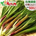 【好評出荷中!お届け日時指定OK】山菜 北海道産 天然 行者にんにく 500g入り 春の味