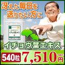Ginkgo-9sam