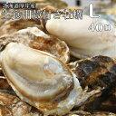 【マルえもん Lサイズ40個】北海道厚岸産本養殖牡蠣生食用