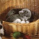 ケーセン社 ねそべり猫 グレー