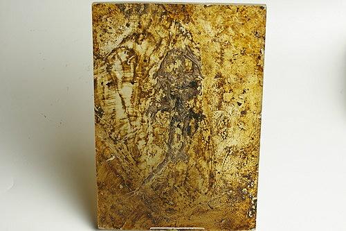 博物館クラス!カエル化石 ドイツ産