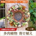届いてすぐ飾れる 多肉植物の寄せ植え リース型