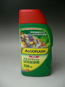 アルゴフラッシュ