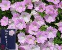 ふんわり、やさしいピンクのお花♪