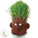 栽培キット かわいい 伸びろ髪の毛 愉快に芝栽培 ヘアラボ お父さん プレゼント 植物 育成 男性 育毛 ゲーム 楽しい 頭 頭皮 発毛