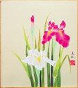 田中美法 『菖蒲』色紙絵