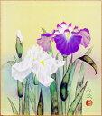 鈴木加弥『菖蒲』色紙絵