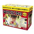【送料無料】ピープル 磁石でくっつく ピタゴラス ブロック ... 知育玩具 おもちゃ 積み木 ブロック 型はめ