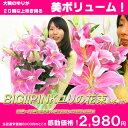 豪華な花束贈っちゃおう!BIG!PINKユリの花束2980円!!ユリ部門1位の実績を持つ超人気花束!リッチな香りも、ゴージャスなボリュームも魅力的!【楽ギフ_包装】