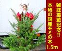 【送料無料】「もみの木 クリスマスツリー 購入」今年こそ!本物モミの木の生ツリー!【高さ:根鉢含め150cm前後】届いて・植えて・すぐ綺麗!鉢植えではないです。トウヒではない本物!【メッセージカード不可】【離島・沖縄配送不可】【RCP】