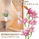 【】石田さんのエントランスシンビジューム 玄関にジャストサイズなミニサイズは、ほのかに香ります!シンビジウム シンピジューム【寒冷地にはお届け不可】【代引き不可】【RCP】