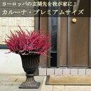 【送料無料】カルーナ ブルガリス プレミアムサイズ 玄関向きの大鉢仕立て ヨーロッパの玄関先を我が家