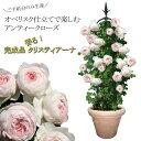 【ご予約分のみ生産】初心者でも豪華に!香りのオベリスクローズ バラ咲くお庭が超簡単!自分で仕立てなく