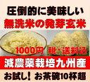 【1000円ポッキリ送料無料】お試しサイズ白米モード楽々炊飯!圧倒的に美味しい減農薬