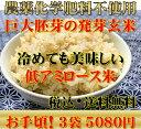 【究極の玄氣】無農薬・巨大胚芽の発芽玄米圧倒的に美味しい無農薬の玄氣1.5kg×3袋(4