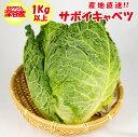 サボイキャベツ(ちりめんキャベツ)1kg以上 冬季限定 11月〜3月 【送料別】
