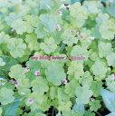 楽天ゲオ楽天市場店【中古】Organic/MY LITTLE LOVERCDアルバム/邦楽