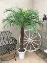 RoomClip商品情報 - フェニックスロベレニー 8-9号 MA H140-160cm 送料無料 観葉植物 新築祝い 開店祝い 開業祝い 引っ越し祝い ギフト お祝い