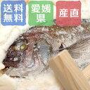 愛媛 ゆら鯛の塩釜焼きB 愛媛県産 元魚1.0kg 木槌付き