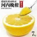 河内晩柑 7kg 贈答用 宇和ゴールド同品種 愛媛県愛南町産・L-2Lサイズ混合 ギフトにも・送料無料