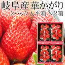 お徳用岐阜いちご 華かがり平箱2パック入×2箱セット(11〜...