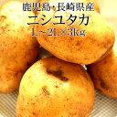鹿児島県産ニシユタカ 2Lx3kg 新じゃが [送料無料 使いやすい量 野菜便 常温便 送料無