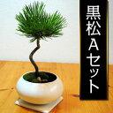 お正月のおしゃれなインテリアに!カンタン!手作り情景盆栽 黒松Aセット【季節限定】
