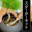 情景盆栽を始める方へ!情景盆栽スタータキット!これさえあればらくらく手作り盆栽始められます!